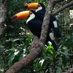 who can? TOUCAN