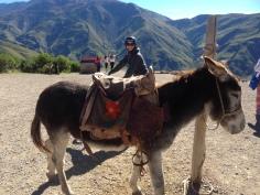 donkey photobomb