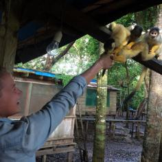 Monkeys love banana