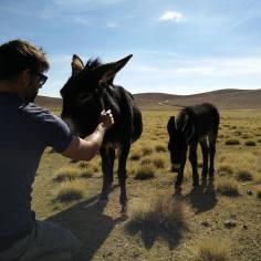 Donkey central