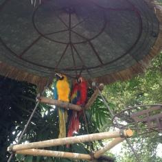 Macawas at Casa Santo Domingo